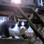 cat_photo.jpg